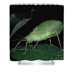 Katydid At Night Shower Curtain