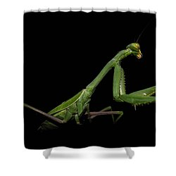 Katydid In Black Shower Curtain