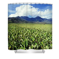 Kauai, Wet Taro Farm Shower Curtain by Bob Abraham - Printscapes