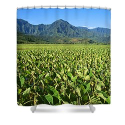 Kauai, Wet Taro Farm Shower Curtain by Himani - Printscapes