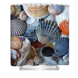 Shower Curtain featuring the photograph Kayla's Shells by John Schneider