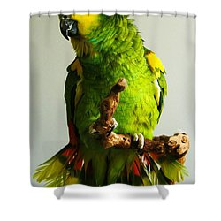 KC Shower Curtain