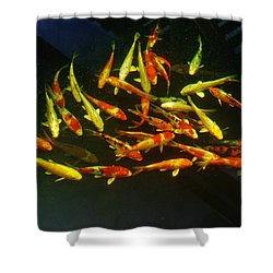 Kcsd Koi 6 2016 Shower Curtain