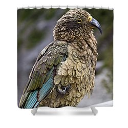 Shower Curtain featuring the photograph Kea Bird by Sally Weigand