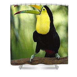 Keel Billed Toucan Calling Shower Curtain by Gerry Ellis