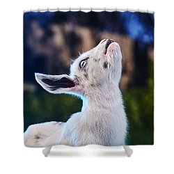 Shower Curtain featuring the photograph Keep Calm And Hold Your Head Up by TC Morgan