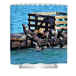 Keep Off The Dock - Sea Lions Can't Read Shower Curtain