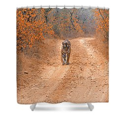 Keep Walking Shower Curtain by Pravine Chester