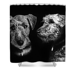Shower Curtain featuring the drawing Keeper The Welsh Terrier by Peter Piatt