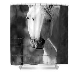Keeping Their Eyes On Us Shower Curtain by Wes and Dotty Weber