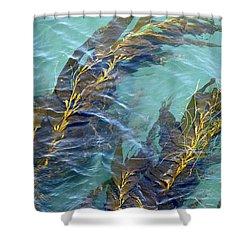 Kelp Patterns Shower Curtain