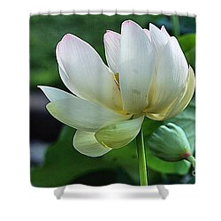 Shower Curtain featuring the photograph Kenilworth 2015 by John S