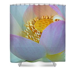 Kenilworth 2015 Number 2 Shower Curtain