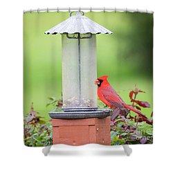 Shower Curtain featuring the photograph Kentucky Cardinal  by Ricky L Jones