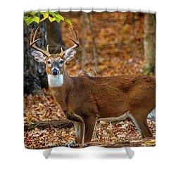 Kentucky Eight #2 Shower Curtain