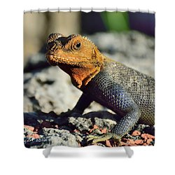 Kenyan Rock Agama Shower Curtain