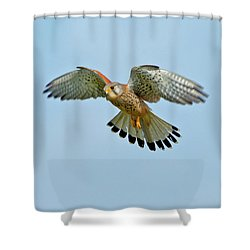 Kestrel In The Wind . Shower Curtain