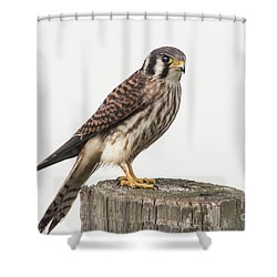 Shower Curtain featuring the photograph Kestrel Portrait by Robert Frederick