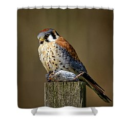 Kestrel With Prey Shower Curtain
