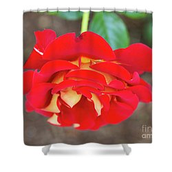 Ketchup And Mustard Rose Shower Curtain by Louise Heusinkveld