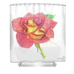Ketchup And Mustard Rose Shower Curtain