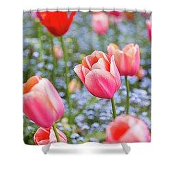 Keukenhof Tulips - Amsterdam Shower Curtain