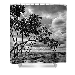 Key Largo Mangroves Shower Curtain