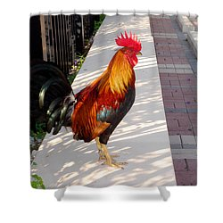 Key West Rooster Shower Curtain
