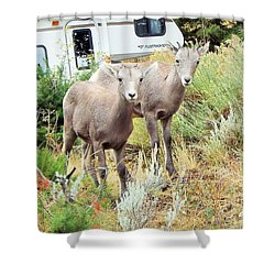 Kid Goats Shower Curtain