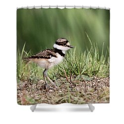 Killdeer - 24 Hours Old Shower Curtain