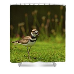 Killdeer Shower Curtain by Karol Livote