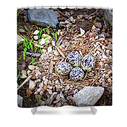 Killdeer Nest Shower Curtain by Cricket Hackmann