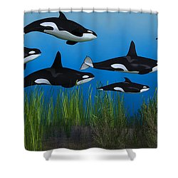 Killer Whale Pod Shower Curtain by Corey Ford
