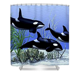 Killer Whales Hunt Together Shower Curtain by Corey Ford