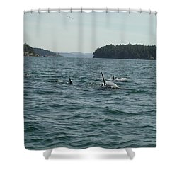 Killer Whales Shower Curtain