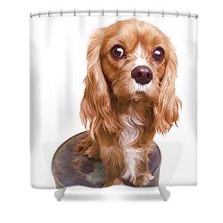 King Charles Spaniel Puppy Shower Curtain by Edward Fielding