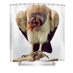 Shower Curtain featuring the photograph King Of The Birds by Cheri McEachin