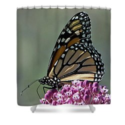 Shower Curtain featuring the photograph King Of The Butterflies by Stephen Flint