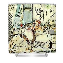 King Of The Chook Yard Shower Curtain