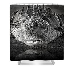 King Of The Glades Shower Curtain by Mark Andrew Thomas