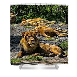 King Of The Pride Shower Curtain by Karol Livote