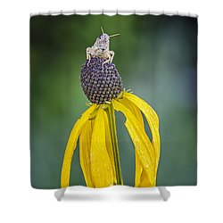 King Of The World Shower Curtain