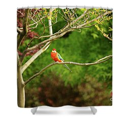 King Parrot Shower Curtain by Cassandra Buckley