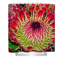 King Protea Shower Curtain by Michael Durst