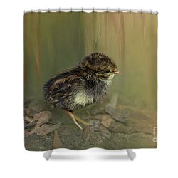 King Quail Chick Shower Curtain
