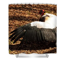 King Vulture 2 Strutting Shower Curtain by Chris Flees