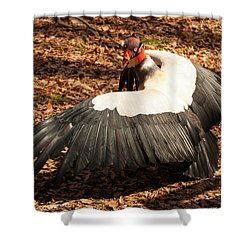 King Vulture 4 Strutting Shower Curtain by Chris Flees