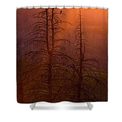 Shower Curtain featuring the photograph Kingdom by Dustin  LeFevre