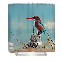 Kingfisher On A Stump Shower Curtain