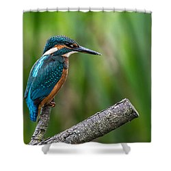 Kingfisher Pose Shower Curtain
